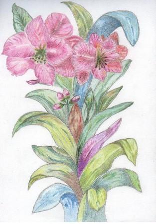 medium_la_plante1.jpg