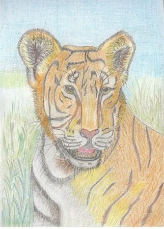 medium_le_tigre.2.jpg
