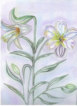 medium_les_fleurs_blanches.2.jpg