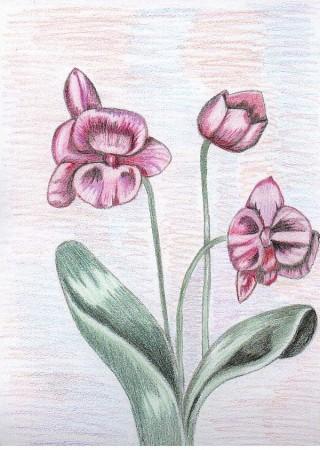 medium_les_orchidees1.jpg