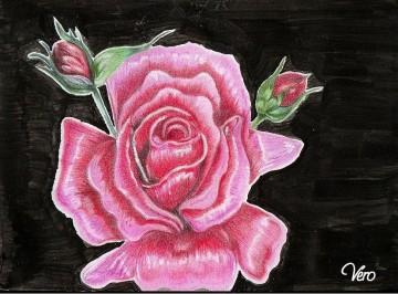 medium_rose_rose.JPG