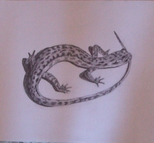 la salamandre.jpg