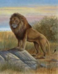 -lion.jpg