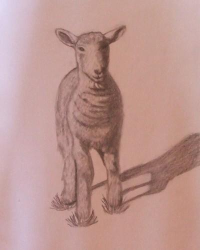 le mouton.jpg