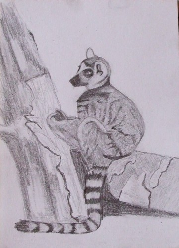 Le lemurien.jpg