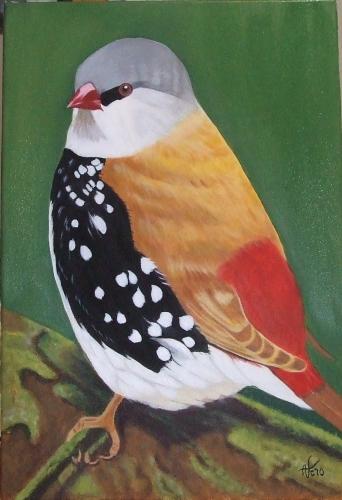 oiseau sans nom.jpg